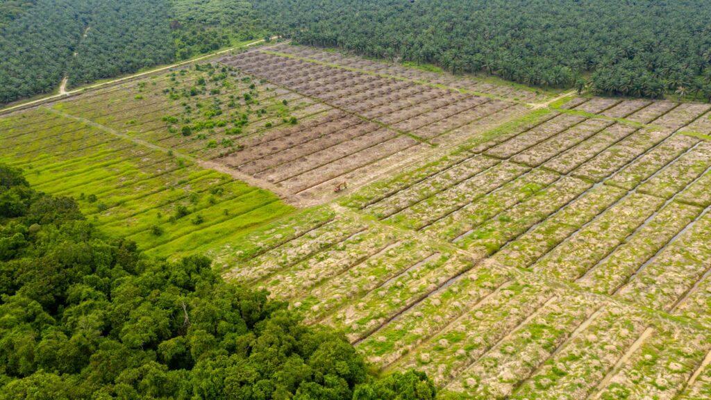 Palmölplantage auf Borneo