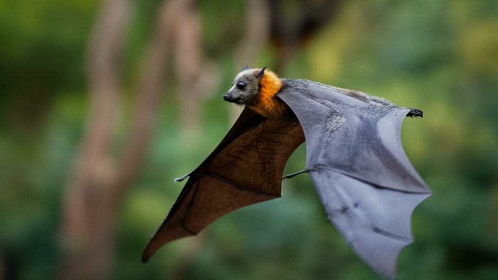 Bat (symbol image)